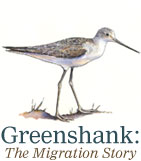 Greenshank The Migration Story logo